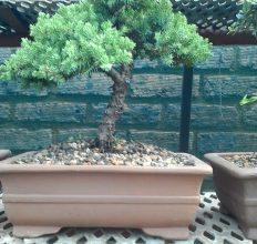 Tree1502501