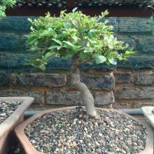 tree3005001